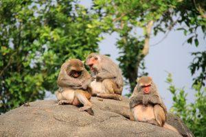 monkey-2315271_1280